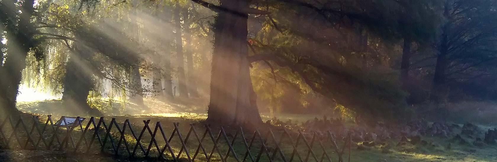 Arboretum Kórnickie - fot. K. Broniewska