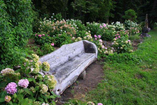 Arboretum Kórnickie - hortensje